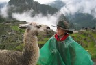 Face to face with a llama, Peru